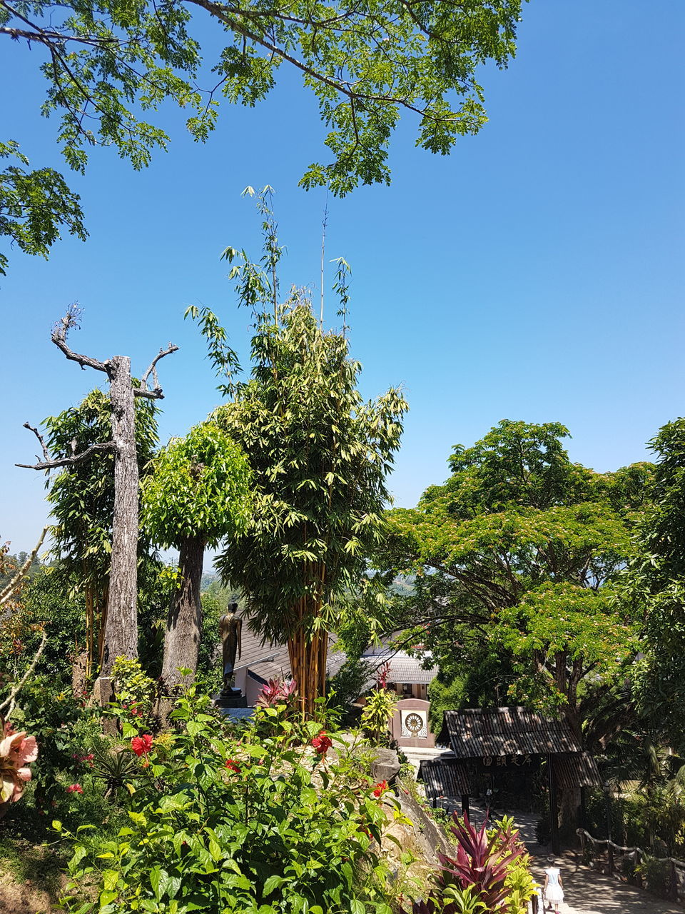 Low Angle View Of Flower Trees Against Clear Blue Sky