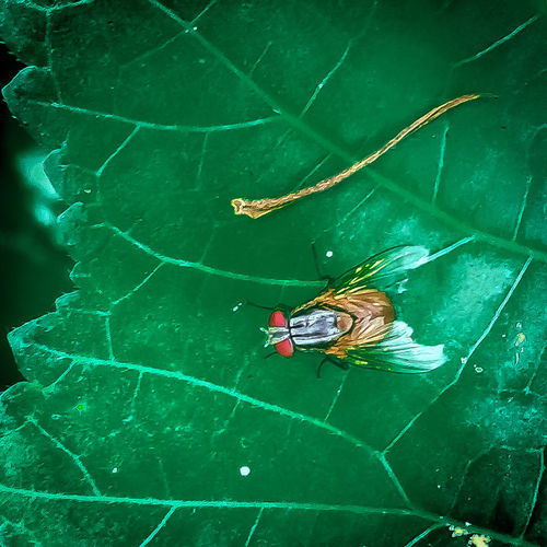 High angle view of insect on leaf at swimming pool