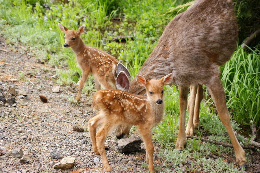 Animal Themes Animal Wildlife Animals In The Wild Mammal Nature No People Outdoors Standing Togetherness Young Animal