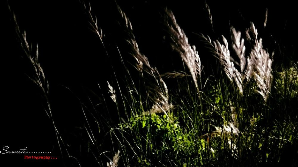 Shining Grass Night Click HDR Pic Photography_by_me Redmi Note3