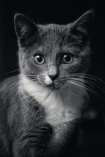 Kittel kitten