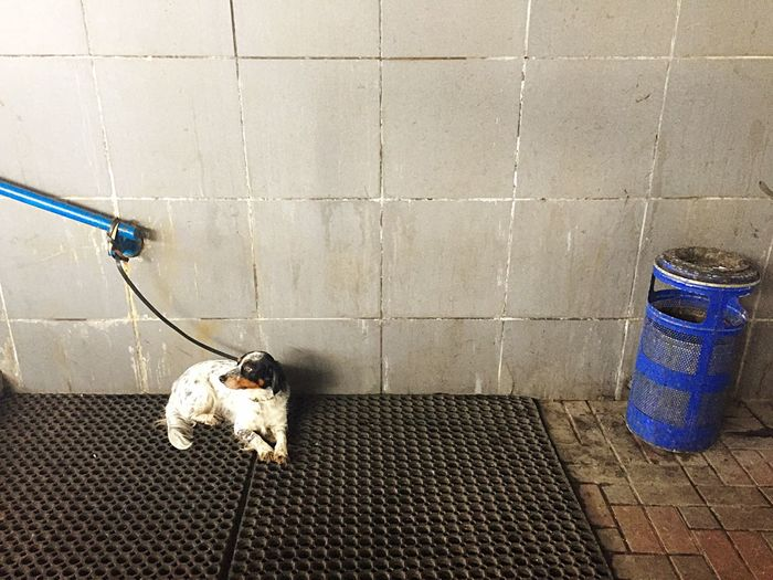 High angle view of dog tied with railing on wall in subway