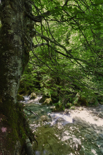 Nature Day Beauty In Nature No People Outdoors Scenics - Nature Forest River Urederra Navarra Senderismo Senderism Blue River Cristalina Water Green Nature