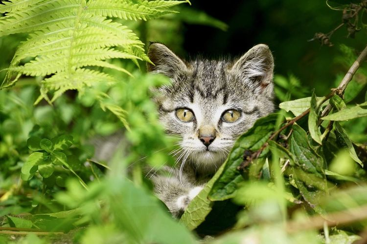 CLOSE-UP OF CAT Hiding In Leaves