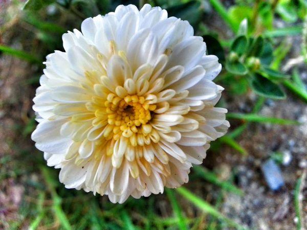 Bu beton yıgınlarının arasındaki güzellikleri de görmek lazım :-) Flower çiçek