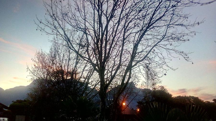 Mountain Lights Multi Colored Tree Sunset Silhouette Sky
