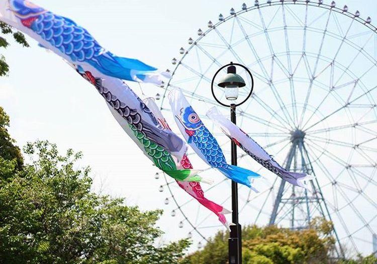鯉のぼり 葛西臨海公園