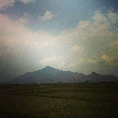 Rice fields. Latepost Naturesmoments_4ever ALaM Gunung mountain landscape