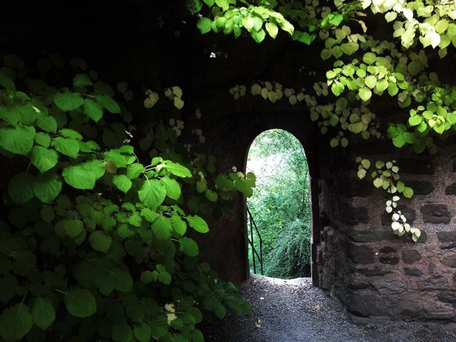 Gate Atthegates Light Dream