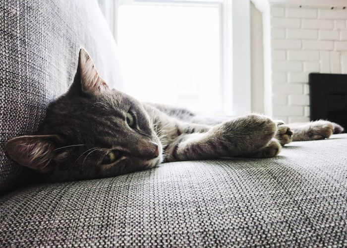 Close-up of cat sleeping on sofa at home
