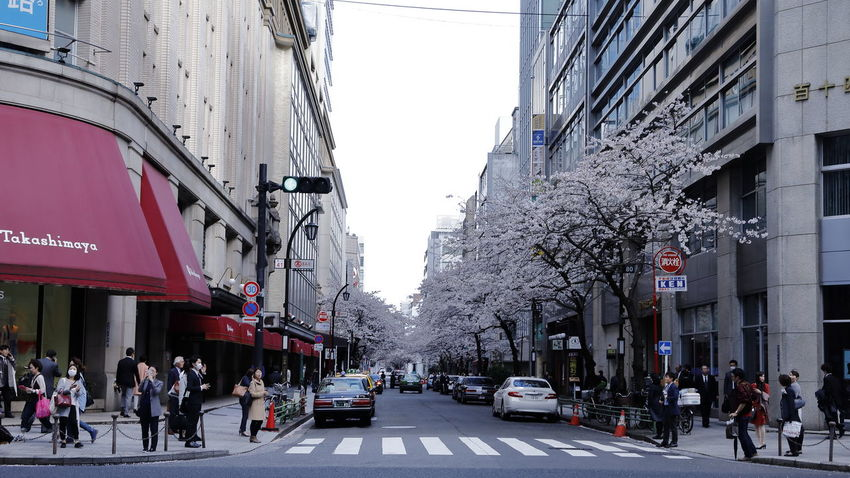 Architecture Building Exterior Built Structure Car Cherry Blossom Cherry Blossoms City City Life City Street City View  Cityscape Day Japan Japan Photography Men Outdoors Road Sakura Spring Spring Flowers Springtime Street Street Photography Streetphotography Tree