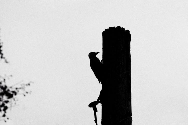 Silhouette bird perching on a rock