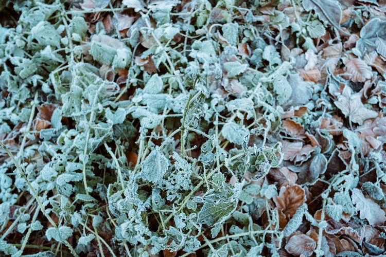 Nature Leaf Leaves Winter Snow Day Frozen Field Lichen Frost Pattern Plant Land Growth Close-up Beauty In Nature No People Backgrounds Full Frame Focus On Foreground Cold Temperature Plant Part Ice