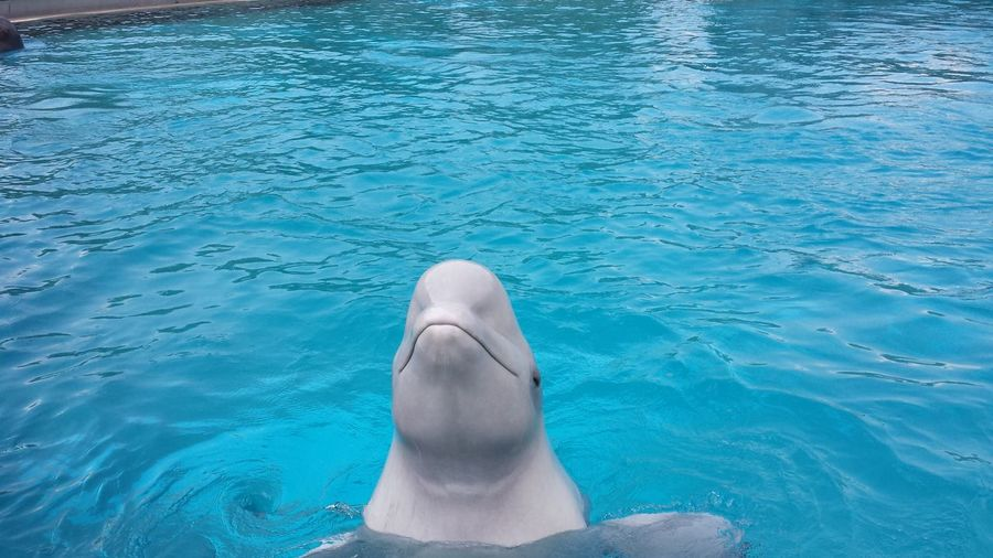 View of dolphin in swimming pool