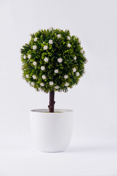 flowery plant Beauty In Nature Bonsai Tree Close-up Day Fake Flower Fake Flowers Fake Plant Flower Flower Collection Flower Head Flowers Flowery Fragility Freshness Green Color Green Flowers  Growth Indoors  Leaf Nature No People Plant Studio Shot Tree White Background