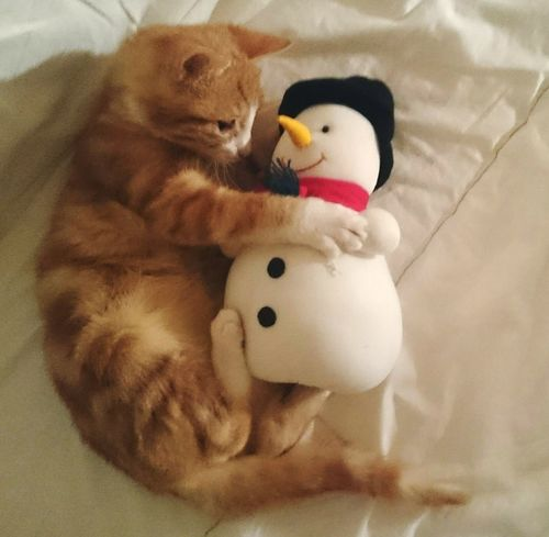 Iloveyou my Snowman Yourmine Together Loveforever NeverLetGo Talktome Dontleaveme Sweetdreams  Nightphotography Catsphotography Christmastime Bonding Cat Kitty Catsofeyem Light And Shadow ColourPhotography Cat Lovers Catsagram Happiness Its Cold Outside