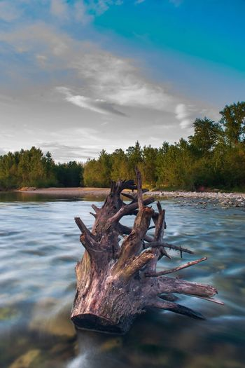 Tree trunk in the river Drava. River Long Exposure Stream Croatia Forest Nature Photography Water Tree Sky Cloud - Sky Landscape