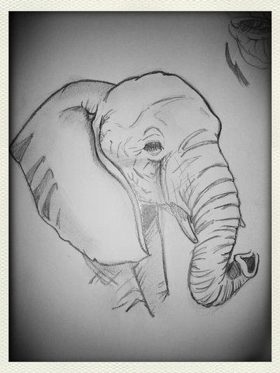 Elephant was done in pencil