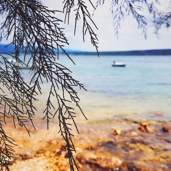 EyeEm Selects Sea Nature Landscape Beach Tree Scenics Beauty In Nature Outdoors No People Travel Destinations Day Sky Horizon Over Water Travel Travel Photography Journey Beachphotography Sun Tourism Fuji Croatia Croatia_photography Croatian Landscape