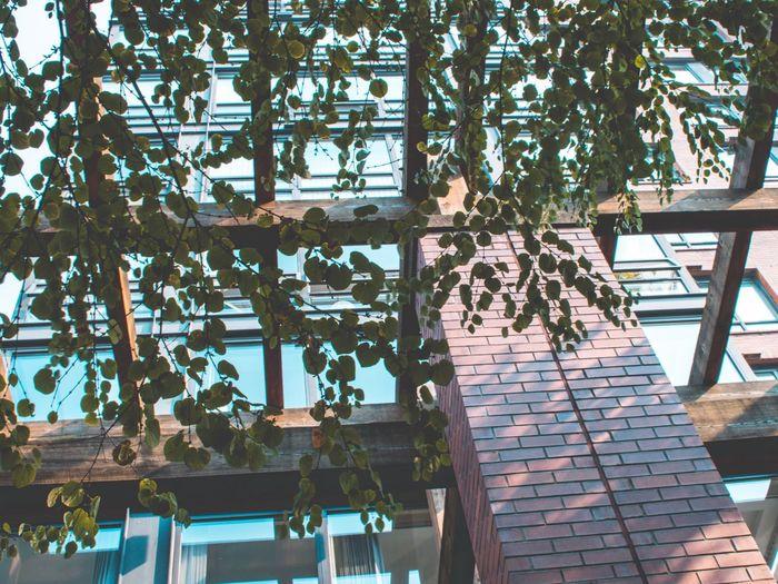 Plant Day Tree