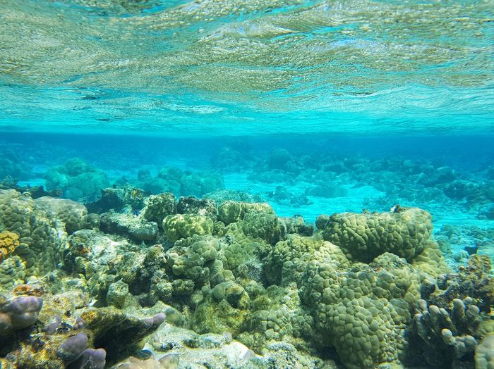 Coral Reef Sea Life Multi Colored UnderSea Underwater Blue Animals In The Wild Scuba Diving Tourism Maupiti French Polynesia Island Travel Destinations Vacations Tikehau Idyllic Beauty In Nature Nature Sea Mer Plongée Snorkeling Done That.