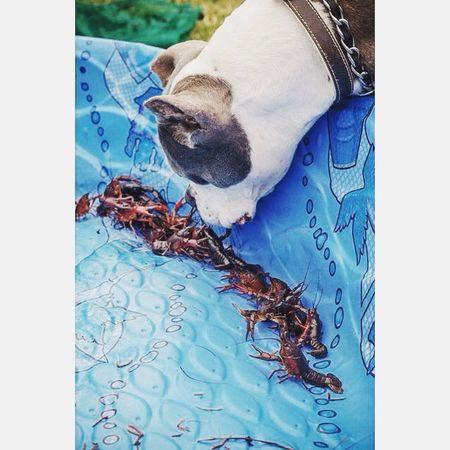 RIP Capone Pitbull Bestfriend EyeEm Best Shots Crawdads Curiousity Dog I Love Dogs