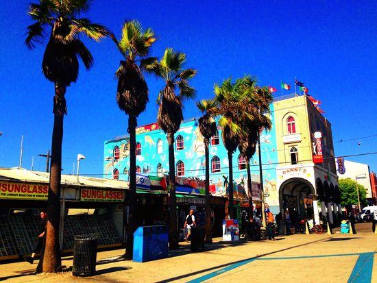 Losangeles Santa Monica Trip Traveling Palm Trees California