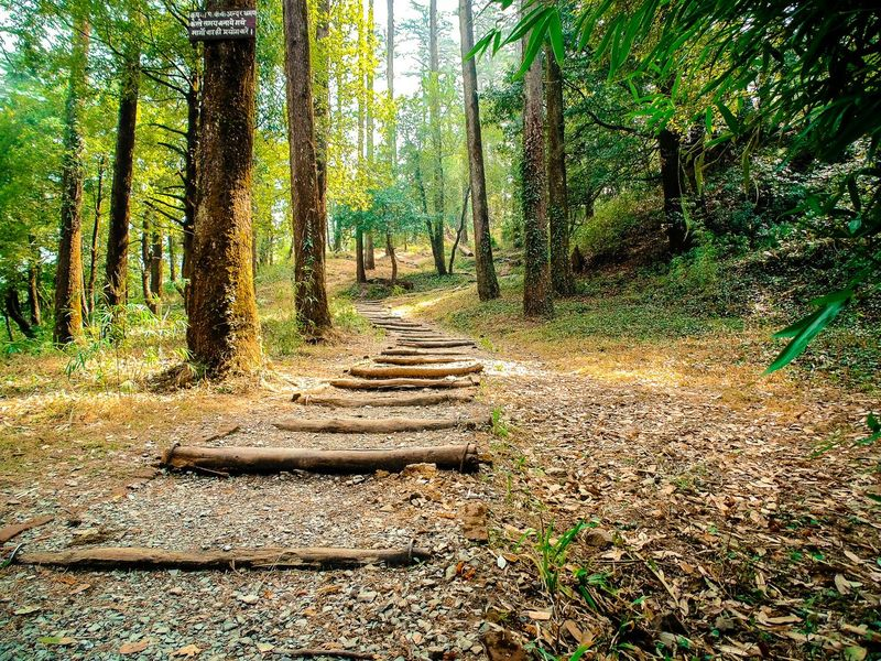 Pathway to paradise ... Path Pathway Nature Pinetrees Pine Forest Mussoorie Dhanaulti Nature_collection Eco Park Uttarakhand Trees Way Warm Beauty In Nature Travel Photography North India Tourist Attraction  Exploring Walking Around Forest Tourism Tadaa Community Freshness Low Angle View