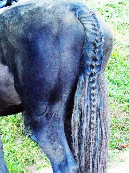 Animal Themes Close-up Domestic Animals Horizon Over Water Horse Tail Nature No People One Animal Outdoors