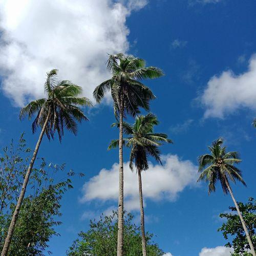 Tree Area Blue