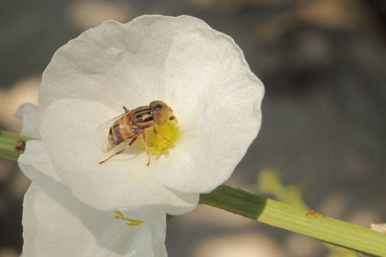mr bee Bee