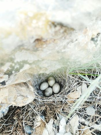 Day Nature Beauty In Nature High Angle View Bird Birdegg Bird Eggs No People Outdoors Close-up