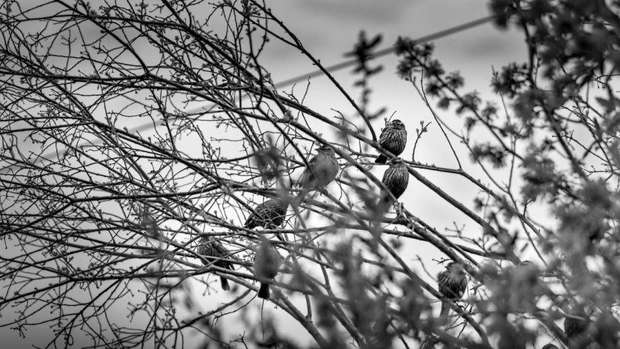 Birds Blackandwhite EyeEm Best Shots Nature
