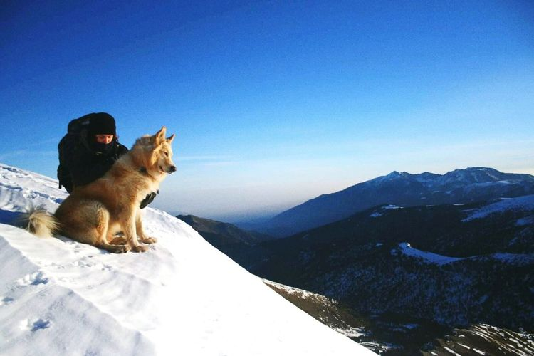 Be. Ready. Snow Pets Winter Cold Temperature Sunlight Friendship Sky Nature Mountain Animal Themes Protruding Outdoors Mammal One Animal Domestic Animals Animal Day No People Dog first eyeem photo