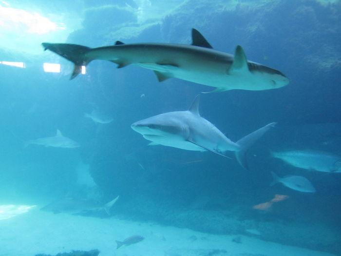 Aquarium Cross Dressing Sharks Fish Sea Life Shark Sharks Swimming Underwater Wildlife