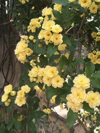 Spring Flowers Great Atmosphere Spring Flowers