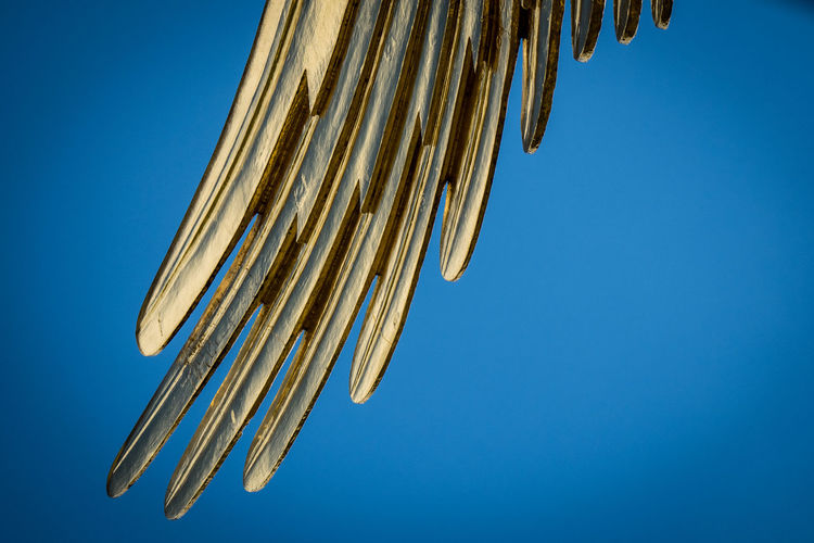 Angel Blue City Of Angels Clear Sky Column Detail Feathers Gold Golden Siegessäule  Siegessäule Berlin Sky Statue Victory Victory Column Wing Wing Of Angels