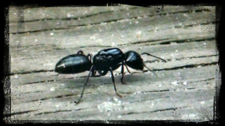 A Walk In The Park Ant Insect_perfection Nature_collection