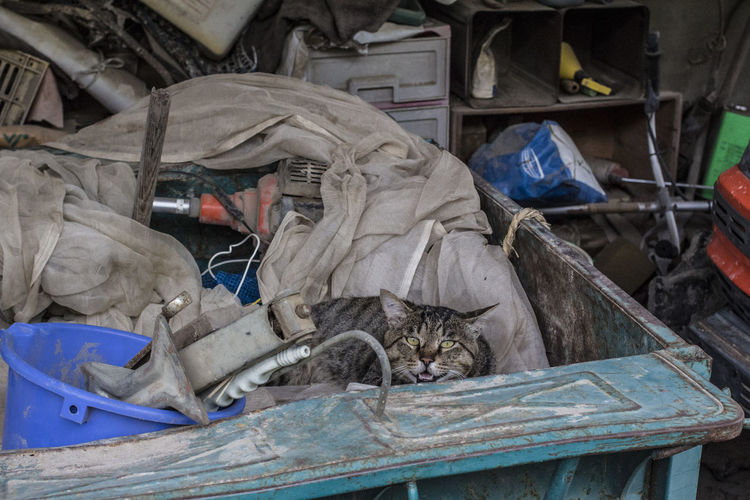 View of cat in hiding in garage