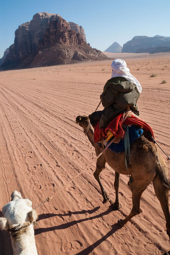 Camel trekking through Wadi Rum in Jordan - POV Jordan Wadi Rum Adult Adventure Arid Climate Camel Camel Riding Camel Trek Camels Desert Nature One Animal One Person Outdoors People Real People Rear View Riding Sand Shadow Sitting Sky Standing Women Working Animal