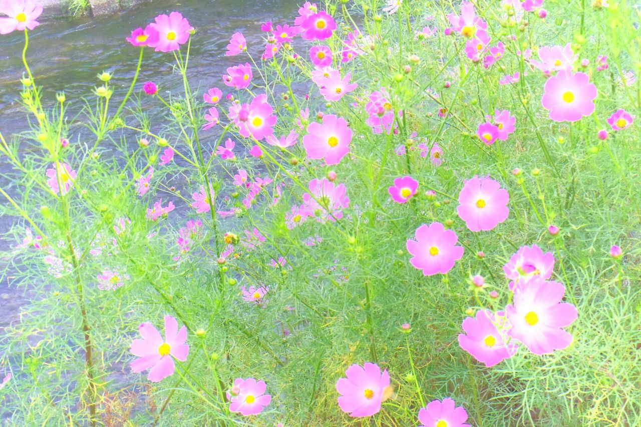 grass, flower, field, nature, growth, no people, pink color, beauty in nature, outdoors, green color, fragility, day, freshness, multi colored, blooming, flower head