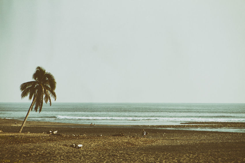 A solitary palm tree is seen on the shore of the beach. Nexpa Beach Beauty In Nature Day Flower Horizon Over Water Nature No People Outdoors Scenics Sea Sky Tranquility Water An Eye For Travel
