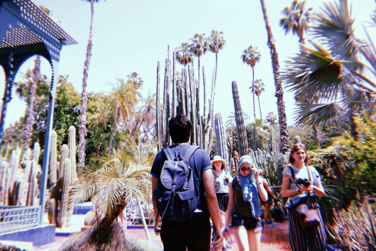 Rear view of people standing on palm trees