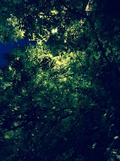Trees Silhouette Street Lights Street Light Silhouette Taken & Edited With My IPhone Taken & Edited By Me