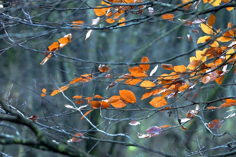 Autumn No