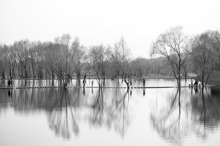 北京的春天 中国 人们 Tree Water Lake Reflection Bird Sky