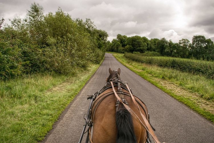 Horse cart on road amidst field against sky