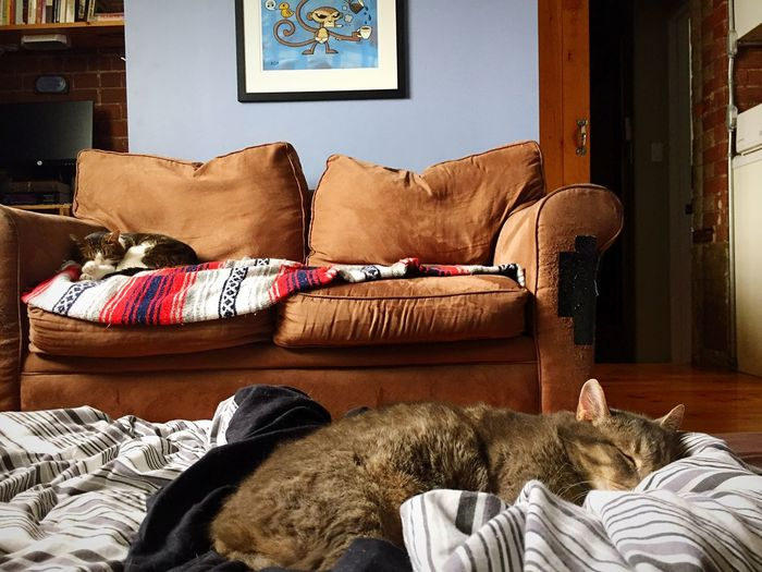 2 cats sleeping separately Loveseat Cat Bed Pets Housecats Indoor Cats Cat Scratching Condo Living Tired Cat Cat Napping Sleeping Cats Cozy At Home EyeEm Selects Furniture Indoors  Pillow Stuffed Bed Sofa Relaxation Home Interior Comfortable Domestic Animals Pets Living Room No People