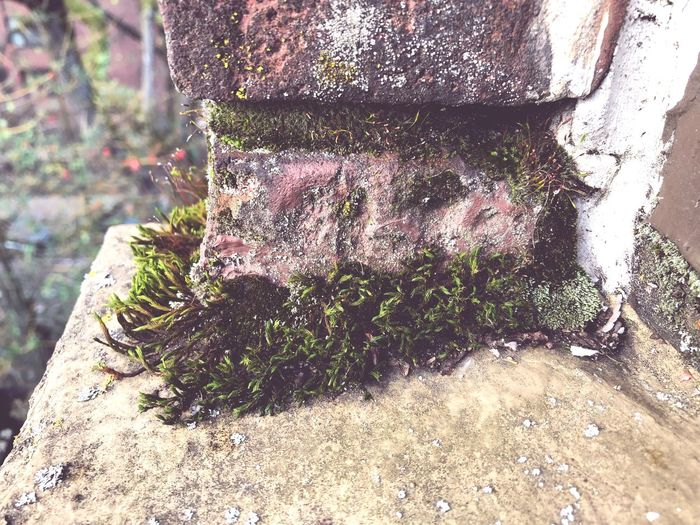 Old brick building City Living Nature Day Growth Tree Trunk Outdoors Tree Moss