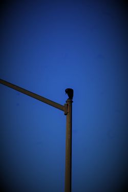 Animal Themes Animal Wildlife Animals In The Wild Bird Blue Clear Sky Day Low Angle View Nature No People One Animal Outdoors Perching Sky